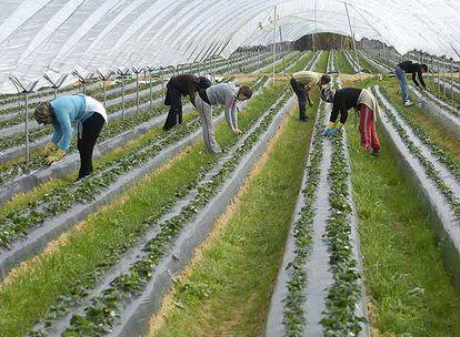 La agricultura está acogiendo a trabajadores expulsados de la construcción, son los nuevos temporeros.