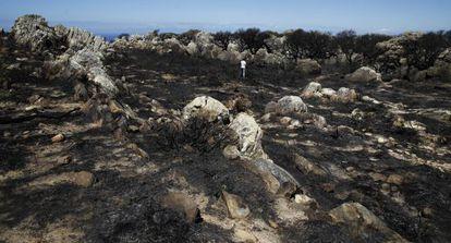 Terrenos del campo de la sierra del Retín, tras el incendio.