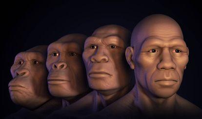 De izquierda a derecha, reconstrucción de los rostros de 'Australopitecus', 'Homo habilis', 'Homo erectus' y 'Homo sapiens'.