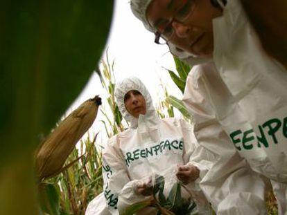 """Los laureados arremeten contra la organización ecologista por su rechazo a  los organismos modificados genéticamente en general y el arroz dorado en particular"""""""