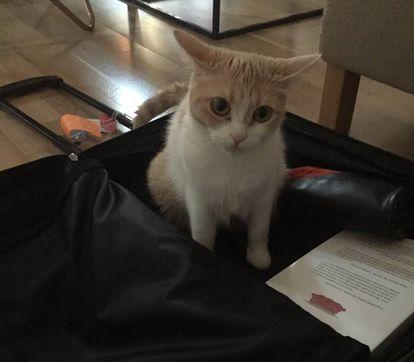 'Mia', inspeccionando una maleta.