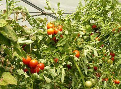 La agricultura ecológica propugna un consumo de temporada y un comercio local.