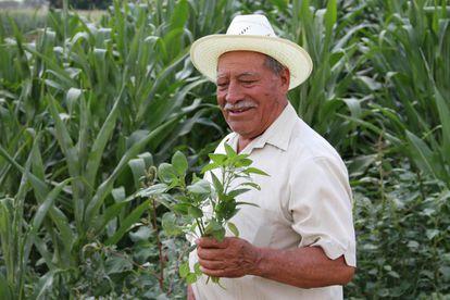 Agricultor en Oaxaca, México.