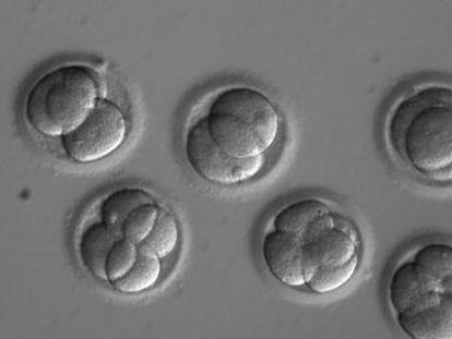La técnica CRISPR elimina la causa genética de la muerte súbita.