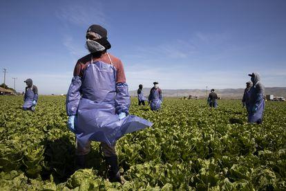 Un grupo de trabajadores  agrícolas en California, Estados Unidos.