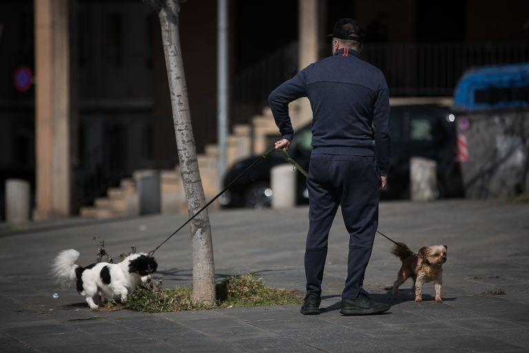 Un hombre pasea dos perros en el Paseo Marítimo de Barcelona durante el estado de alarma.