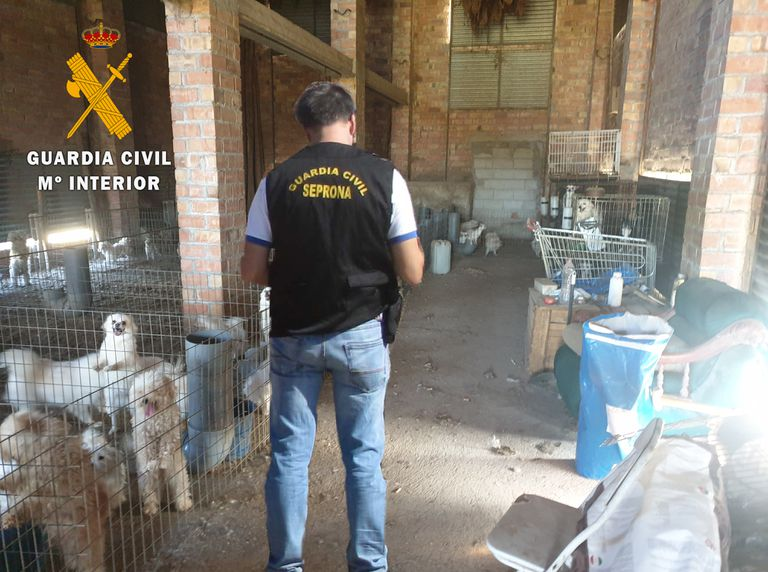 Un agente de la Guardia Civil, durante la investigación en el criadero clandestino de perros en Vegas del Genil (Granada).