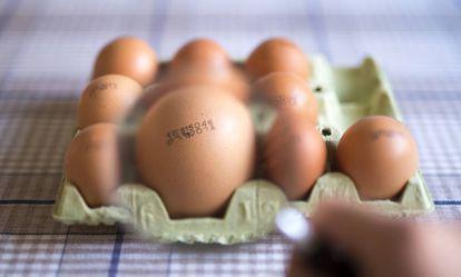 Imagen de un cartón de huevos.