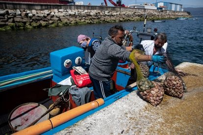 A group of shellfish fishermen unload their catch in the port, after passing through the checkpoint and before doing a final screening at the fish market