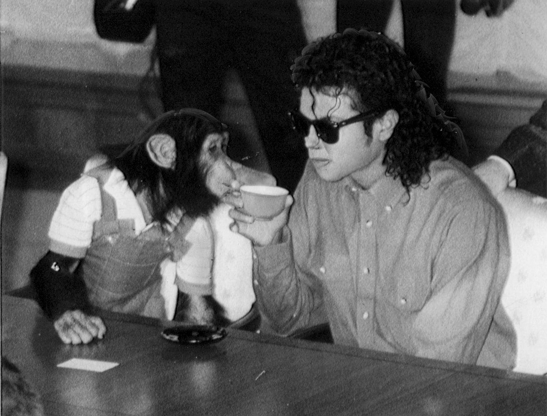Michael Jackson llevó a Bubbles de gira por Japón. En la imagen, el chimpancé bebe de su misma taza de té en la visita del cantante al ayuntamiento de Osaka en septiembre de 1987.