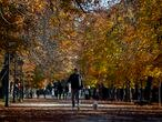 A man wearing a face mask to prevent the spread of coronavirus walks with his dog at the Retiro park in Madrid, Spain, Thursday, Nov. 11, 2020. Spain's health ministry is reporting 411 more fatalities for the coronavirus on Tuesday, a new daily record since contagion started picking up pace this summer. (AP Photo/Manu Fernandez)