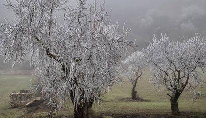 Árboles congelados en Rocallaura