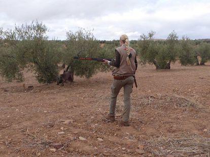 Un cazador en un olivar en la provincia de Jaén durante el estado de alarma.