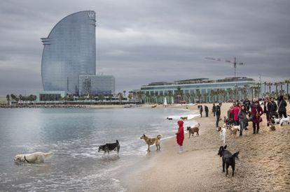 El Partido Animalista reclama 500 metros de playa para los perros en Barcelona.