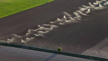 Vista aérea de un cultivo de regadío en Mota del Cuervo (Cuenca).