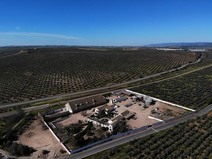 Vista aérea de la hacienda 'Buenavista' en la finca del mismo nombre en la localidad cordobesa de El Carpio y propiedad de la Casa de Alba.