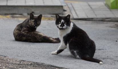 Gatos en Valdemorillo.