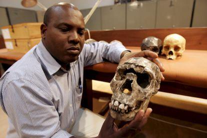 """El doctor Frederick Kyalo Manthi muestra un modelo en yeso del cráneo del """"Niño de Turkana"""" que forma parte de una exposición en el Museo Nacional de Kenia."""