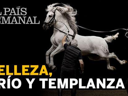 El legado del pura raza español