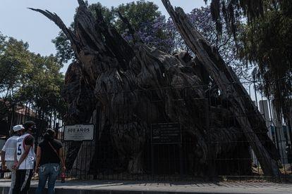 Los visitantes observan este jueves la placa junto al ahuehuete para la conmemoración de los 500 años de la llamada noche victoriosa.