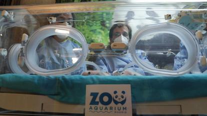 El alcalde de Madrid, José Luis Martínez-Almeida, en el Zoo con los dos nuevos pandas.
