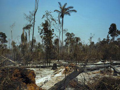 Las huellas de los incendios en el municipio de Cláudia, en el Estado brasileño de Mato Grosso.
