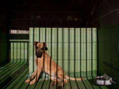 Un can en una perrera en Cataluña.