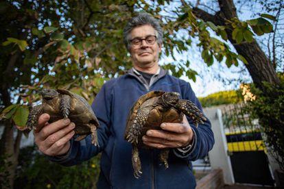 El ecologista Juan Clavero con dos de las tortugas moras pendientes del traslado a Marruecos.