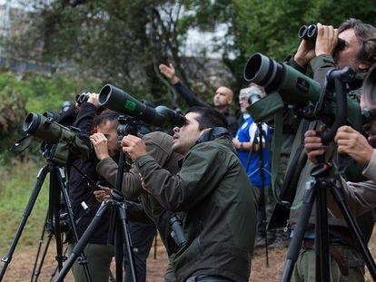 Aficionados a la observación animal contemplan osos en Somiedo (Asturias).