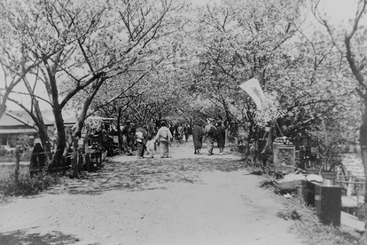 Hanami festival on the banks of the Arakawa River in the 1920s, in an image of the Funatsu family.