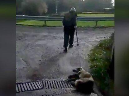 Muere la perra a la que un cazador disparó y apaleó en Lugo después de que el animal pariera