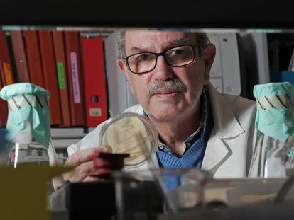 Vicente Larraga, investigador experto en vacunas, en su laboratorio del CSIC este miércoles.
