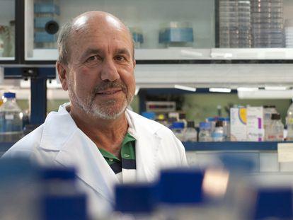 Mariano Esteban, investigador del Consejo Superior de Investigaciones Científicas (CSIC).