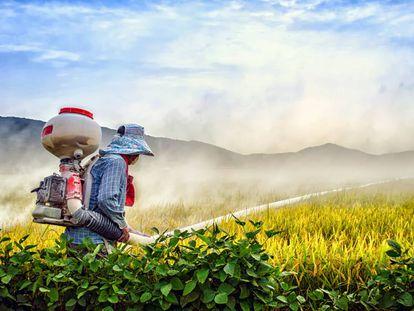 Un agricultor pulveriza un campo de arroz en Ganghwa-gun (Corea del Sur).