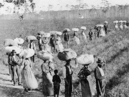 Esclavos en un campo de algodón, en Carolina del Sur (Estados Unidos), hacia 1860.