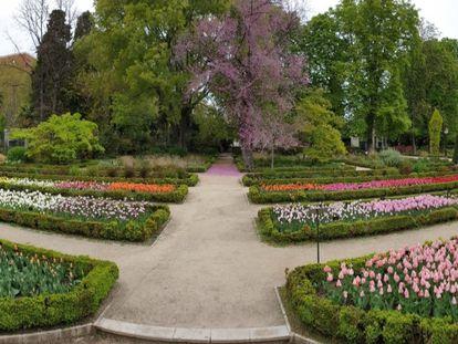 Tulipanes en el Jardín Botánico antes de ser cortados y repartidos a distintos hospitales madrileños.