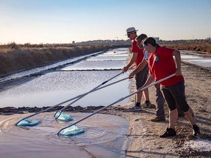Los emprendedores de la empresa Mar Natural aprenden a recoger la flor de sal del salinero Demetrio Berenguer en La Esperanza, la salina artesanal que la Universidad de Cádiz ha habilitado como vivero empresarial para aprender el oficio.