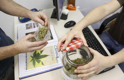 Dos usuarios comprueban la calidad de la marihuana en san Sebastián.