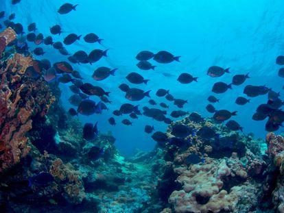 Un banco de peces en el Parque Nacional Arrecife Alacranes, en Yucatán, México.
