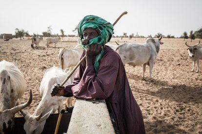 Un pastor vigila su ganado mientras bebe de un pozo en el pueblo de Mbetiou Peulh, Senegal.