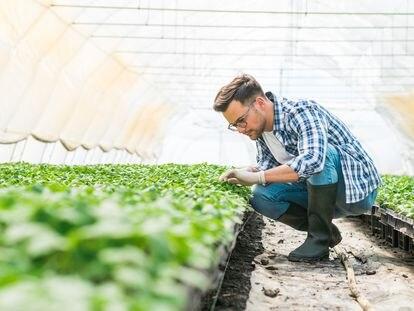 Según datos de la Asociación Europea para la Protección de las Plantas, la utilización de productos fitosanitarios evita que se pierda hasta un 40% de la producción agraria mundial.
