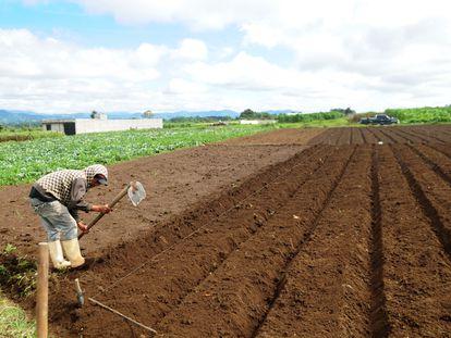 Un agricultor en Guatemala.