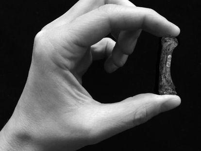 Primer hueso de un Australopithecus afarensis, una de las primeras especies que pudo haber utilizado tecnología