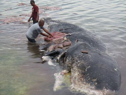Dos personas retiran este lunes trozos de plástico del estómago de una ballena en el Parque Nacional Marino de Wakatobi (Indonesia).