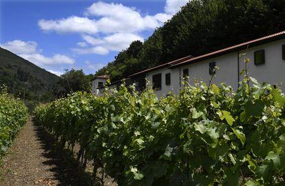 Contigua al parador, a los clientes hospedados se les ofrece una visita por los viñedos de la Bodega Monasterio de Corias. La denominación de origen protegida Cangas cuenta con 40 hectáreas de cultivo. Rueda, en Castilla y León, con 18.000