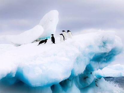 Pingüinos Adelia, en una imagen cedida por el Fondo Mundial para la Naturaleza (WWF).