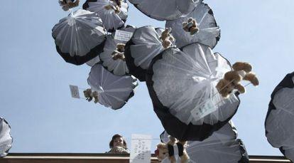 Osos de peluche en paracaídas caen cerca de Minsk con mensajes democráticos.