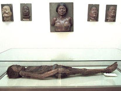Cadáver momificado de un guanche, traído a Madrid en el siglo XVIII desde una cripta montañosa canaria.