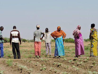 Un grupo de agricultores que practica los principios de la agroecología en las afueras de Yamena (Chad).