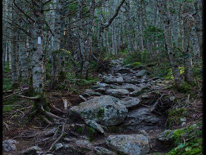 Bosque en las Montañas Blancas de New Hampshire (EE UU), en la cordillera de los Apalaches.